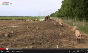 Elevage biologique de porcs en plein air chambre d - Chambre agriculture alpes maritimes ...